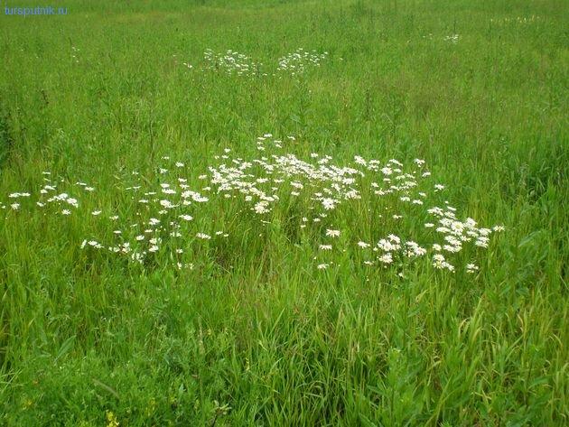 Анклав полевых цветов