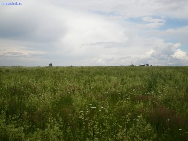 Бесконечные зеленые просторы