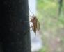 Комар на макро