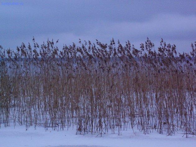 30.12.06 - Заросли во льду