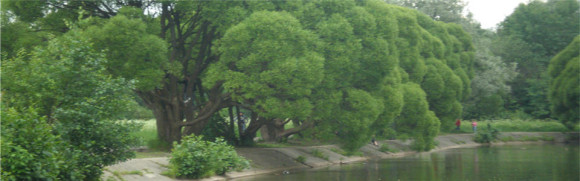 Москва, Измайловский парк (м.Измайловская) - 28.06.2008