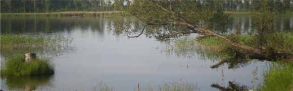 Тверская область, д. Куряево, 19.06.2009 - 03.07.2009